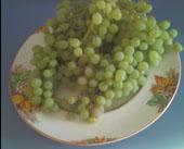 Bounty of grape